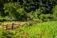 Лес города Yalova - Турции Стоковые Изображения RF