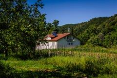 Лес города Yalova - Турции Стоковая Фотография