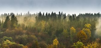 Лес горы на горных склонах на туманном вечере стоковая фотография rf