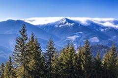 Лес, горы, небо и туман Карпатов Стоковое Изображение RF