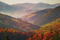 Лес горы осени лес последняя осень Стоковые Изображения