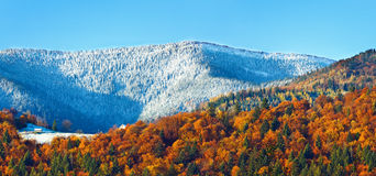 Лес горы осени Стоковые Изображения