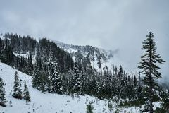 Лес горы с снегом и туманом зимы Стоковое Изображение