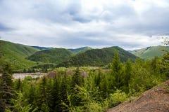 Лес горы Стоковые Изображения