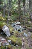 Лес горы Стоковые Фотографии RF