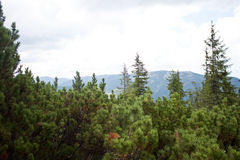 Лес горы Стоковое Изображение