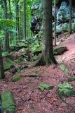 Лес горы Стоковые Изображения RF