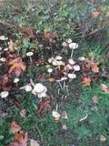 Лес гриба стоковая фотография rf