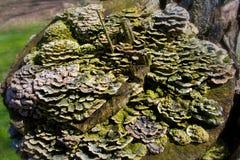 Лес грибков Стоковые Изображения RF