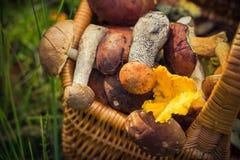 Лес грибов корзины падения польностью съестной Стоковое Фото