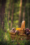 Лес грибов корзины падения польностью съестной Стоковые Фото