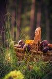 Лес грибов корзины падения польностью съестной Стоковые Изображения