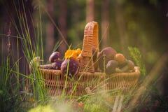 Лес грибов корзины падения польностью съестной Стоковая Фотография RF