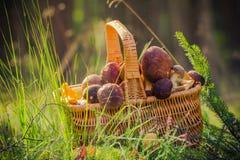 Лес грибов корзины польностью съестной Стоковое Изображение