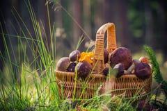 Лес грибов корзины польностью съестной Стоковые Фотографии RF
