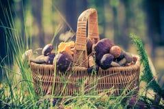 Лес грибов корзины польностью съестной Стоковая Фотография RF