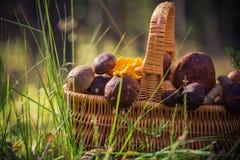 Лес грибов корзины польностью съестной Стоковое Фото