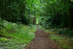 Лес, грибы, сор леса, ватка, конусы, дорога стоковая фотография rf