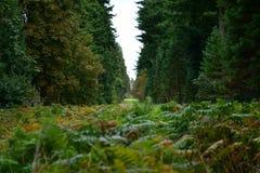Лес, грибы, сор леса, ватка, конусы, дорога стоковые изображения