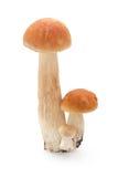 Лес & грибы Стоковая Фотография
