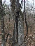 Лес, деревья осенняя пуща Стоковые Фотографии RF