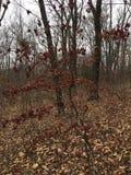Лес, деревья сезон путя пущи падения осени Стоковая Фотография
