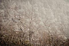 Лес ели горы во время зимы, белых снега и льда и заморозка на лесных деревьях в небе солнечного дня холодной зимы ярком ясном гол стоковые изображения rf