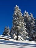 Лес ели на зимний день новый снежок Стоковые Изображения RF
