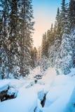 Лес ели покрытый с снегом Стоковые Изображения RF