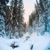 Лес ели покрытый с снегом Стоковое Изображение RF