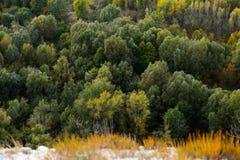 Лес дерева лиственницы осени ландшафта большой возвышенности красивый Стоковые Изображения