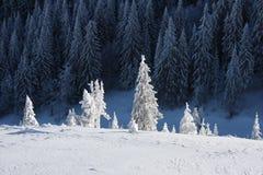 Лес дерева покрытый снегом Стоковая Фотография RF