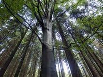 Лес лета от нижнего взгляда Стоковые Фото