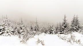 Лес елевого дерева туманный покрытый снегом в ландшафте зимы Стоковое фото RF