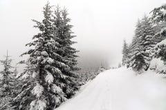 Лес елевого дерева туманный покрытый снегом в ландшафте зимы Стоковые Изображения