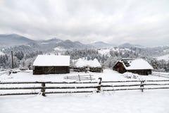 Лес елевого дерева туманный покрытый снегом в ландшафте зимы Стоковая Фотография