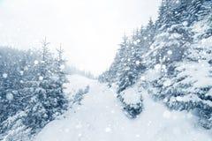 Лес елевого дерева туманный покрытый снегом в ландшафте зимы Стоковые Фото