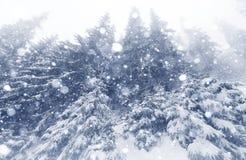 Лес елевого дерева туманный покрытый снегом в ландшафте зимы Стоковое Изображение