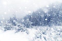 Лес елевого дерева туманный покрытый снегом в ландшафте зимы Стоковое Фото