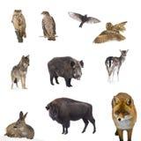 Лес животных стоковое фото rf