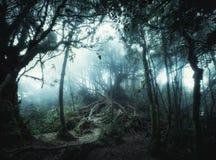 Лес джунглей фантазии тропический в сюрреалистических цветах Landsc концепции стоковое изображение