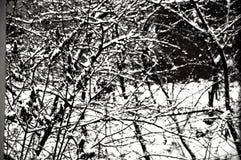 Лес загадочной зимы строгий стоковое фото rf
