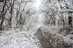 Лес загадочной зимы рождества снежный с заволакиванием разветвляет стоковое фото