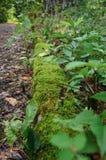 Лес захватывает старую дорогу стоковое фото rf
