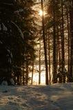 Лес захода солнца зимы Skandinavien Стоковые Фото