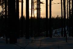 Лес захода солнца зимы Skandinavien Стоковые Изображения RF