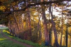 Лес захода солнца Стоковое Фото