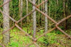 Лес за загородкой Стоковое Изображение RF