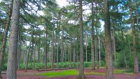 Лес зеленого цвета линии деревьев сфокусировал стоковые изображения
