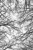 Лес зимы - верхняя сень Стоковые Изображения RF